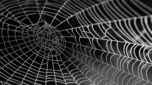 How to Keep Spiders Out of Your Basement (14 Proven Ways)