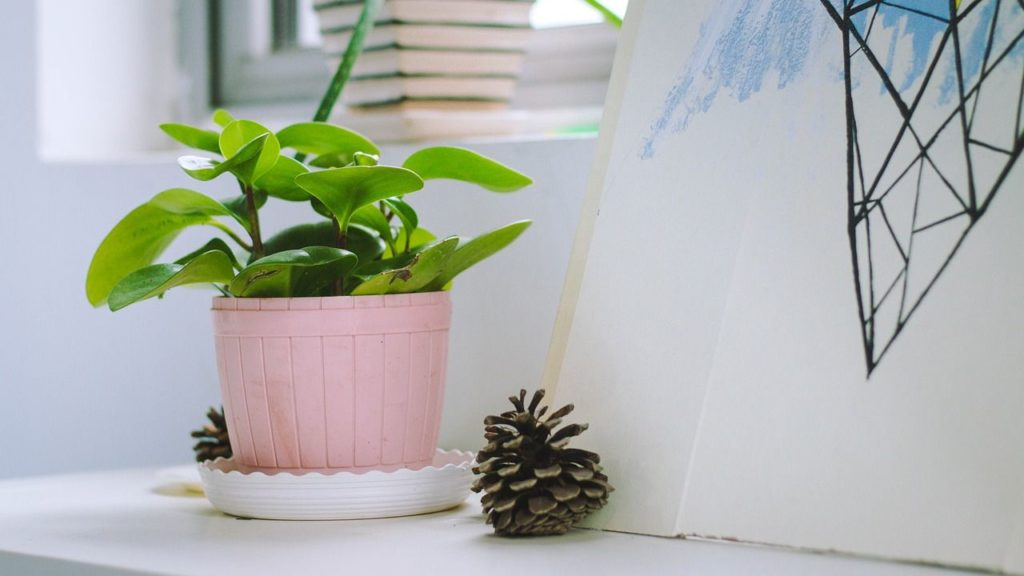 reduce room humidity using indoor plants